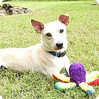Adopt A Pet :: Ralphie - Mocksville, NC