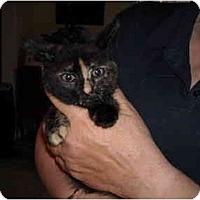 Adopt A Pet :: Allie - Riverside, RI