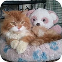 Adopt A Pet :: Julius - Anchorage, AK