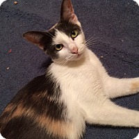 Adopt A Pet :: Lady (LE) - Little Falls, NJ