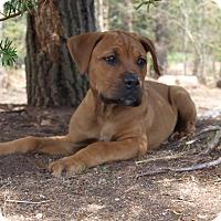 Adopt A Pet :: Darby - Southington, CT