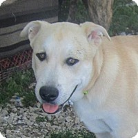 Adopt A Pet :: Marley - Copperas Cove, TX