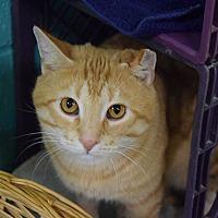 Adopt A Pet :: Cedric - Pottsville, PA