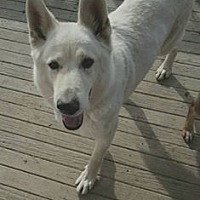 Adopt A Pet :: Ranger - Newport, KY