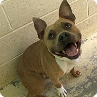 Adopt A Pet :: Hercules - Greensburg, PA