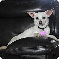Adopt A Pet :: *Meela - PENDING - Westport, CT