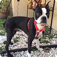 Adopt A Pet :: Maurice - Davie, FL