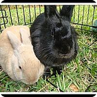 Adopt A Pet :: Butters & Blaze - Williston, FL