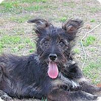 Adopt A Pet :: DAGWOOD - Humboldt, TN