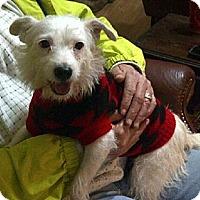 Adopt A Pet :: Veronica in Houston - Houston, TX