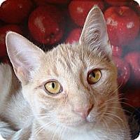 Adopt A Pet :: Kenny - Albany, NY