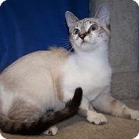 Adopt A Pet :: K-Hannah2-Dolly - Colorado Springs, CO