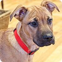 Adopt A Pet :: Cinco - Homewood, AL