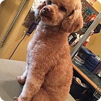 Adopt A Pet :: Bobby - Essex Junction, VT