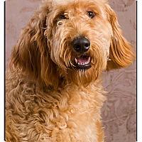 Adopt A Pet :: Dolly - Owensboro, KY