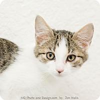 Adopt A Pet :: Smokey - Fountain Hills, AZ