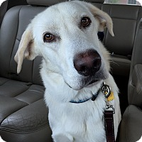 Adopt A Pet :: Chamomile - Coppell, TX