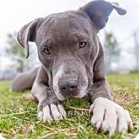 Adopt A Pet :: Dozer-Crooked toothed, banana loving snuggle bug! - Chicago, IL