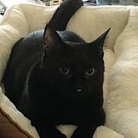 Adopt A Pet :: Dominick - Apex, NC