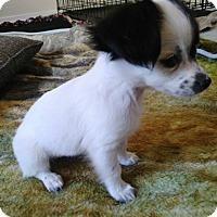 Adopt A Pet :: Aruba - Meridian, ID