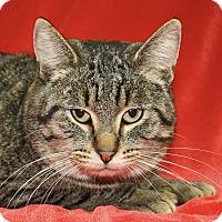 Adopt A Pet :: Thorne - Jackson, MI