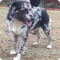 Adopt A Pet :: Pete PENDING - Westport, CT