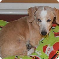 Adopt A Pet :: Marita - Prole, IA