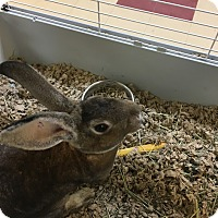 Adopt A Pet :: Carrots - Red Wing, MN