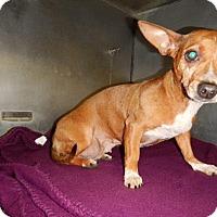 Adopt A Pet :: Khloe - Kalamazoo, MI