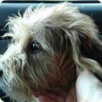 Adopt A Pet :: Malcom - Boston, MA