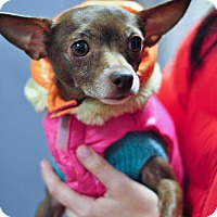 Adopt A Pet :: Madeline - Washington, DC