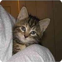 Adopt A Pet :: Abby - Bristol, RI