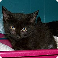 Adopt A Pet :: Georgette - Dover, OH