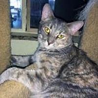 Adopt A Pet :: L'oreal - Mission Viejo, CA
