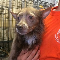 Adopt A Pet :: Splinter - El Centro, CA