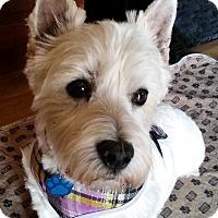 Adopt A Pet :: Lacey-Pending Adoption - Omaha, NE