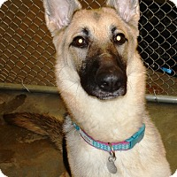 Adopt A Pet :: Maxine - Kalamazoo, MI
