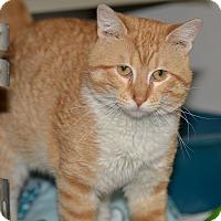 Adopt A Pet :: Shiloh - Ottumwa, IA