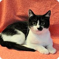 Adopt A Pet :: Emma - Greensboro, NC