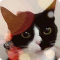 Adopt A Pet :: Wallis - Trevose, PA