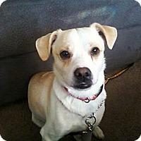 Adopt A Pet :: Finn - Garwood, NJ