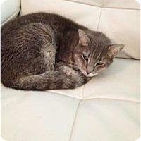 Adopt A Pet :: Aldo - Mobile, AL
