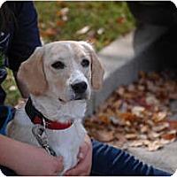Adopt A Pet :: Sonny - Cumming, GA