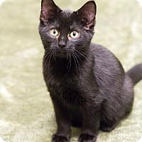 Adopt A Pet :: Sarah - Chicago, IL