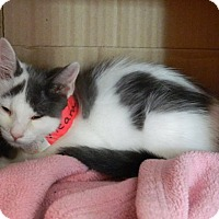 Adopt A Pet :: Meara - The Colony, TX