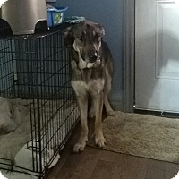Adopt A Pet :: Zoe - Northumberland, ON