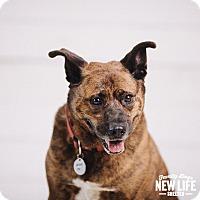 Adopt A Pet :: Spencer - Portland, OR