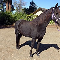 Adopt A Pet :: Maya - El Dorado Hills, CA