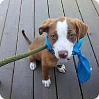 Adopt A Pet :: Montague - Houston, TX