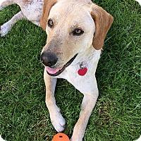 Adopt A Pet :: Woody - Buckeystown, MD